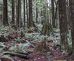 The scenic and quiet forest that surrounds Mike Lake in Golden Ears Provincial Park