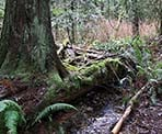 A small stream along the trail around Mike Lake in Golden Ears Provincial Park