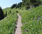Wildflowers surround the hiking trail through the meadows to Mount Cheam in late-July