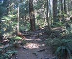 The St. Georges Trail on the way up to Mount Fromme in North Vancouver
