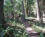 The hiking trail up the steep slope of Mount Gardner on Bowen Island
