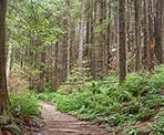 Some wooden steps along the Cedar Mill Trail on the way to Norvan Falls