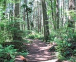 The beautiful forest in Pacific Spirit Regional Park in Vancouver