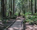 A wooden boardwalk crosses through an ecologically sensitive area in Pacific Spirit Regonal Park