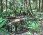Several wetland areas through Pacific Spirit Regional Park are important for the ecology of the park