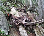 A steep incline with tree roots and a rope assist along the Paton Peak Trail