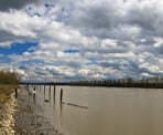 The view along the Fraser River near the Pitt River Regional Greenway