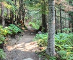 The forested trail to Rainbow Lake in Whistler, BC