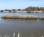Great bird watching along the dike system at the Reifel Bird Sanctuary