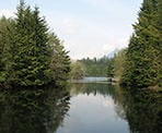 A view of the calm water of Rice Lake in North Vancouver, BC