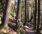 The beautiful forested walk along the trail around Sasamat Lake