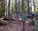 The start of the Seven Sisters Trail from the Entrance Bay Campground at Cultus Lake