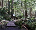 The start of the small loop near the giant Douglas Fir Trees along the Seven Sisters Trail