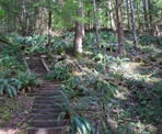 Wooden stairs near the giant Douglas Fir Trees along the Seven Sisters Trail