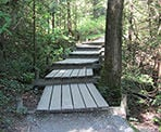 Wooden boardwalk steps along the Shoreline Trail in Port Moody, BC
