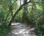 The gravel trail along the Shoreline Trail in Port Moody, BC