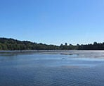 A view looking out over the water along the Shoreline Trail in Port Moody, BC