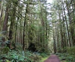 The western rainforest on the trail to Skookumchuck Narrows near Egmont