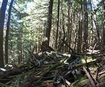 An old cabin on Grouse Mountain that has collapsed many years ago