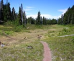 The trail through the alpine meadow along the Skywalk North Trail