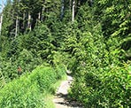 The trail to St. Mark's Summit near Cypress Mountain and following the Howe Sound Crest Trail