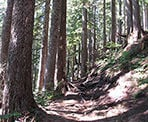 The hiking trail to St Mark's Summit follows the Howe Sound Crest Trail