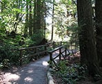 A wooden bridge near Beaver Lake in Stanley Park near downtown Vancouver