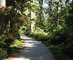 A forested trail through Stanley Park near downtown Vancouver