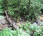 A log bridge crossing near the start of the trail to Sumas Mountain