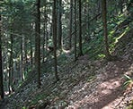 The Sumas Mountain trail passes through the steep section of forest