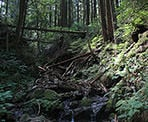 A small creek trickles down along the Sumas Mountain trail