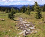 A small stream flows through the alpine meadows in Manning Provincial Park