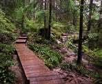 The wooden boardwalks along the trail to Twin Falls on a rainy day