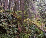 The steep stairs along the trail in Lynn Canyon in North Vancouver