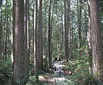 Hiking through the rain forest in Lynn Headwaters Regional Park in North Vancouver