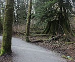 A wide gravel trail in Tynehead Regional Park in Surrey