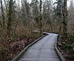 Boardwalks along the Nurse Stump Trail in Tynehead Regional Park