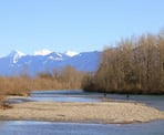 Fishing along the Vedder River as viewed from the Rotary Trail