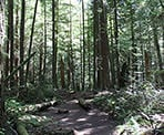 The forest trail on the way to Whyte Lake in West Vancouver