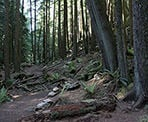 The Whyte Lake trail passes through scenic forests in West Vancouver