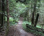 The Woodland Walk Trail in Pinecone Burke Provincial Park, Coquitlam